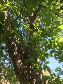 30 - bomen - 1