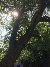 30 - bomen - 3