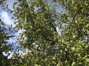 appeloogst - 3