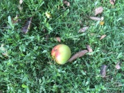 appeloogst - 6
