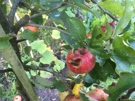 appeloogst - 8