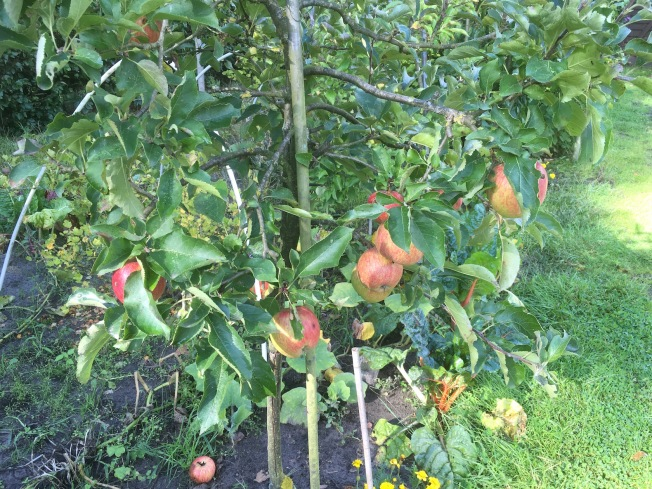 appeloogst - 9