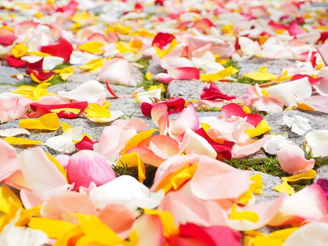 rose-petals-693570__480