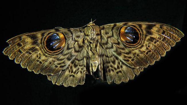moth-195882__480